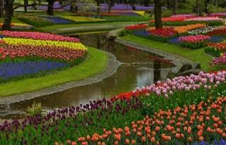 植物园绿化