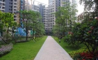 东方丽城小区绿化